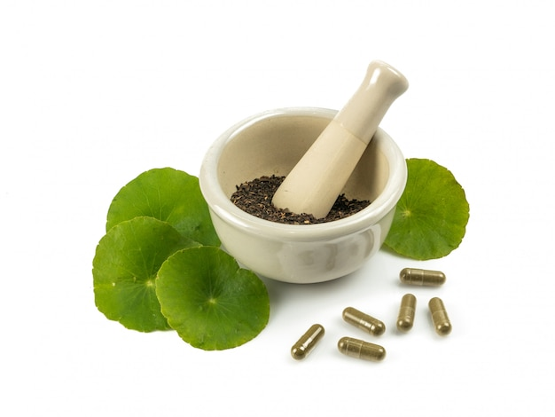 Cola asiatica di foglia asiatica herb, pennywort indiano, centella asiatica, erba tropicale