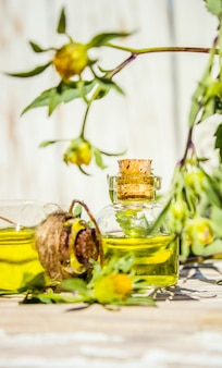 Collage di erbe e olio essenziale. natura.