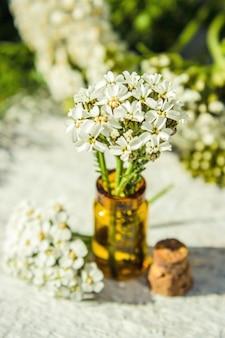 Collage di erbe medicinali. messa a fuoco selettiva piante bio-naturali.