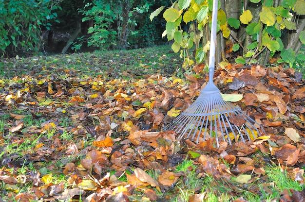 Collezionare foglie