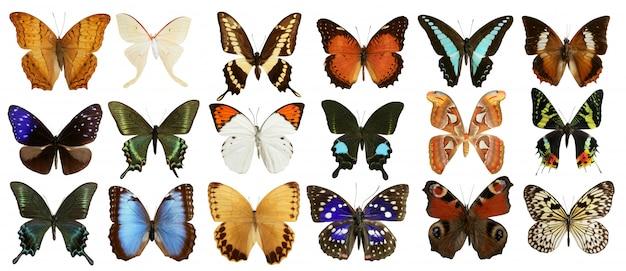 Collezione di farfalle colorate isolato su bianco