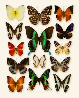 Collezione di farfalle isolata