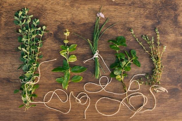Collezione di ramoscelli di piante verdi
