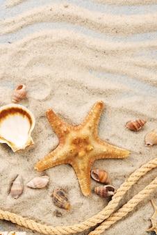 Collezione di stelle marine e conchiglie in sabbia