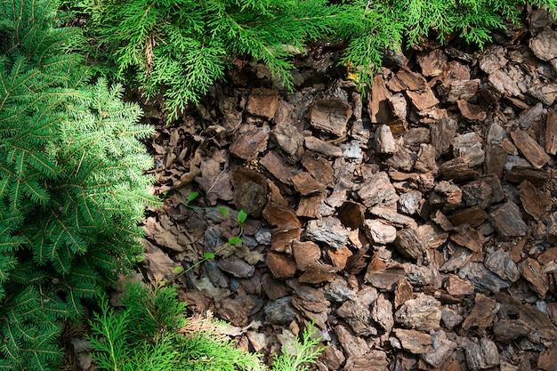 Collina alpina di conifere e arbusti è pacciamata con corteccia.