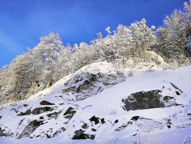 Collina coperta di alberi e neve sotto la luce del sole e un cielo blu a larvik in norvegia
