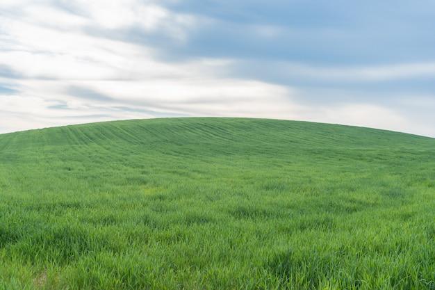 Collina di erba verde sotto il cielo blu
