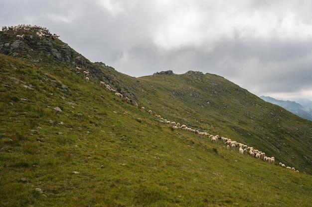 Collina ricoperta di vegetazione con pecore su di essa sotto un cielo nuvoloso