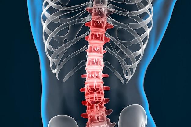 Colonna vertebrale evidenziata. illustrazione 3d