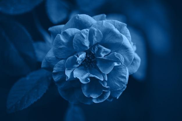 Colore blu classico dell'anno 2020. sfondo di natura