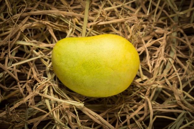 Colore del mango chartreuse. verde e giallo. nome yaikrom. asiatico. tailandia. isolato su sfondo bianco