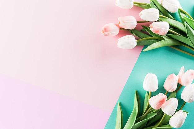 Colori pastello sfondo con modelli di fiori piatti tulipani laici.