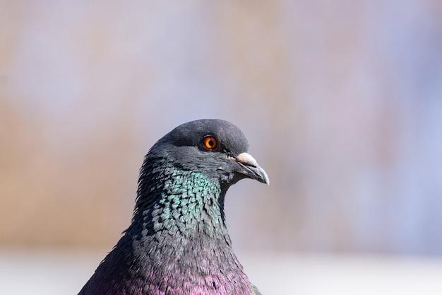 Colpi del primo piano di uccelli