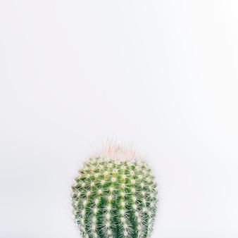 Colpo a macroistruzione della pianta del cactus isolata su priorità bassa bianca