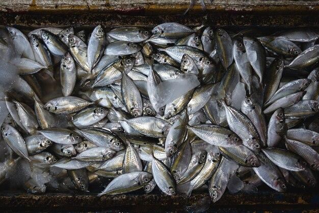 Colpo aereo del pesce su un mercato ittico di primo mattino