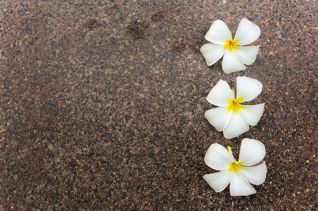 Colpo alto vicino dei fiori del frangipane