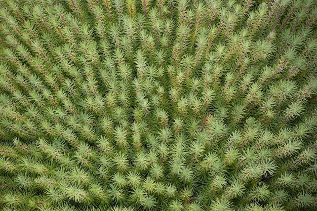 Colpo ambientale delle piante succulente verdi comuni