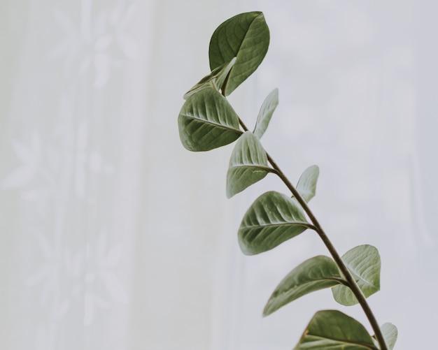 Colpo ampiamente selettivo del primo piano di un ramo con le foglie verdi