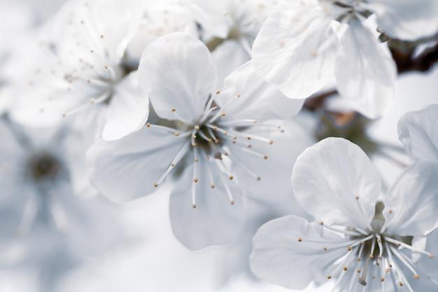 Colpo del fuoco selettivo del primo piano dei fiori bianchi con una priorità bassa vaga