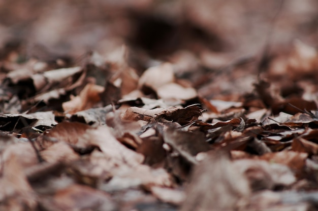 Colpo del fuoco selettivo del primo piano delle foglie di autunno cadute asciutte