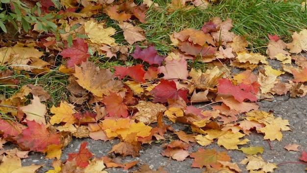 Colpo del primo piano dei bei fogli di autunno caduti variopinti sulla terra