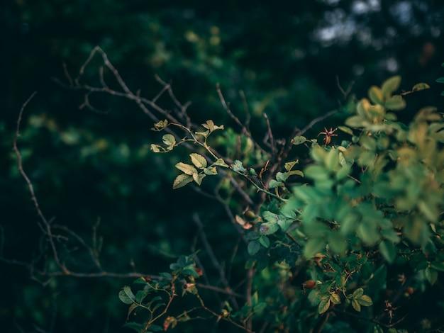 Colpo del primo piano del fuoco selettivo delle piante con le foglie verdi