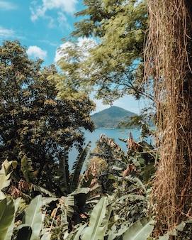 Colpo del primo piano del paesaggio verde che circonda la spiaggia di rio de janeiro