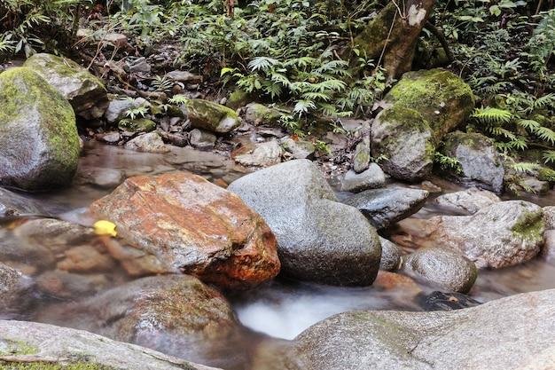 Colpo del primo piano dell'acqua che fiorisce attraverso parecchie rocce nel bosco