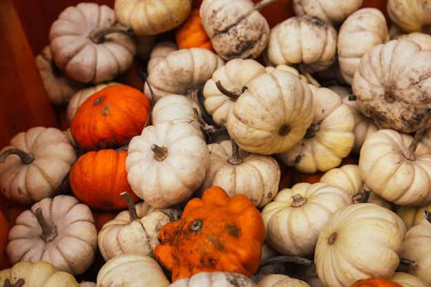 Colpo del primo piano dell'angolo alto del raccolto bianco ed arancio delle zucche