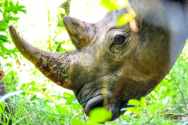 Colpo del primo piano della testa di un rinoceronte vicino alle piante e ad un albero nessun giorno soleggiato