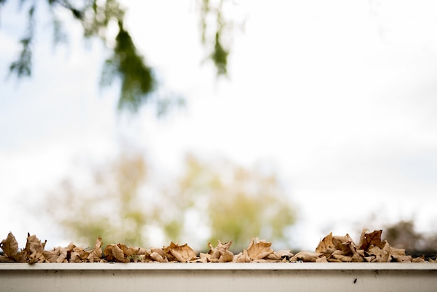 Colpo del primo piano delle foglie marroni asciutte che sono caduto su una superficie bianca con un fondo vago