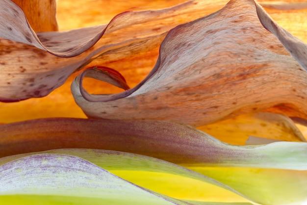 Colpo del primo piano delle foglie marroni e verdi al giorno