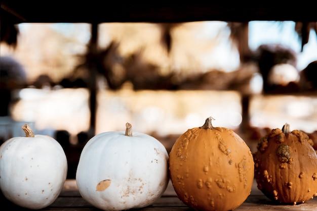 Colpo del primo piano delle zucche bianche ed arancioni su una superficie di legno con una priorità bassa vaga