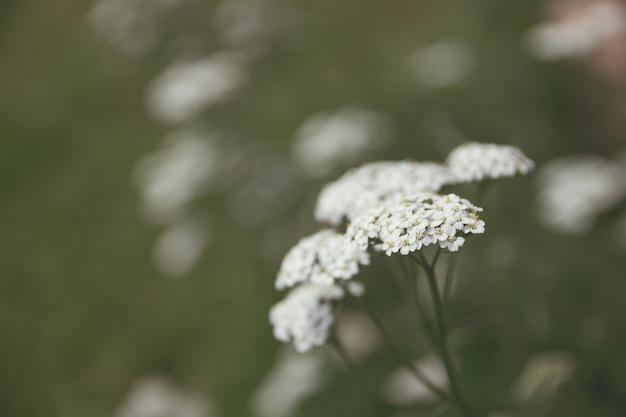 Colpo del primo piano di bella pianta bianca in una foresta con uno sfondo sfocato