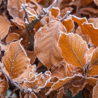 Colpo del primo piano di belle foglie autunnali ricoperte di brina con uno sfondo sfocato