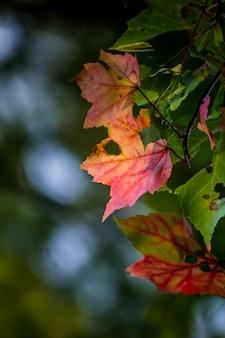 Colpo del primo piano di belle foglie colorate con fori e sfocato