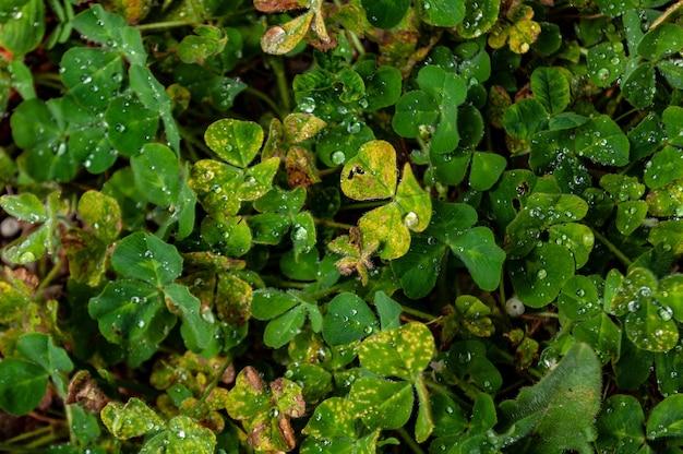 Colpo del primo piano di belle foglie verdi e gialle ricoperte di gocce di rugiada