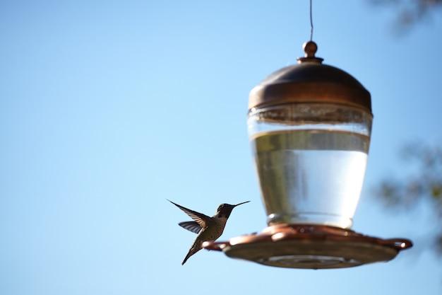 Colpo del primo piano di bello colibrì che si siede su una lampada