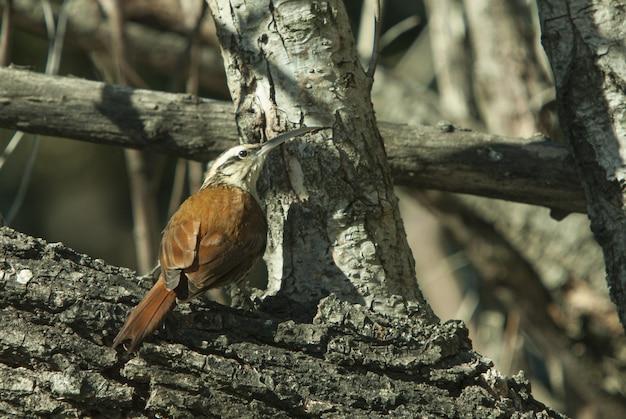 Colpo del primo piano di bello uccello con un grande becco che si siede su un tronco di legno