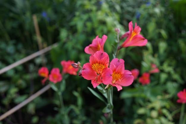 Colpo del primo piano di piccoli fiori rosa in un giardino pieno di piante in una giornata luminosa