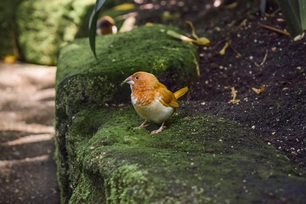 Colpo del primo piano di un adorabile uccello su una roccia ricoperta di muschio in un parco