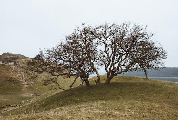 Colpo del primo piano di un albero su un paesaggio verde sotto un cielo limpido