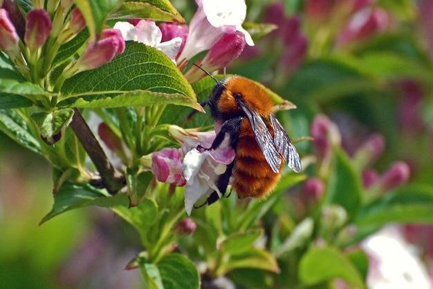 Colpo del primo piano di un insetto uccello su un fiore selvatico nella foresta