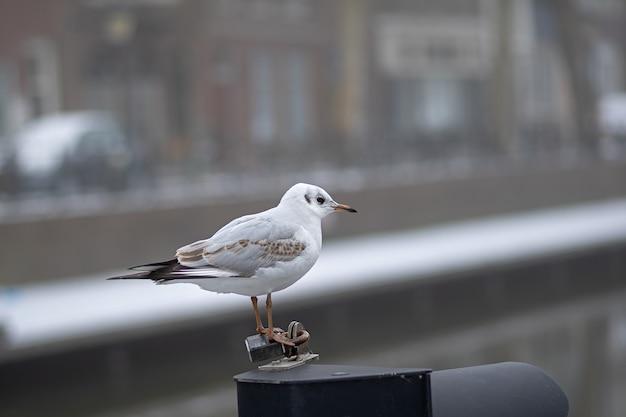 Colpo del primo piano di un piccolo uccello bianco in piedi su un pezzo di metallo durante il giorno