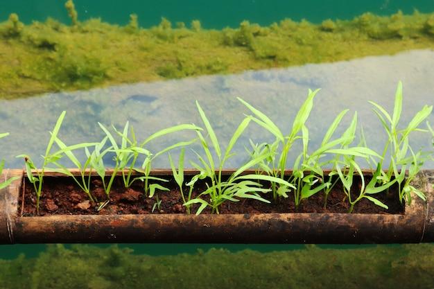 Colpo del primo piano di un tubo con piante verdi in esso