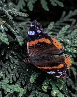Colpo del primo piano di una bellissima farfalla su un albero verde