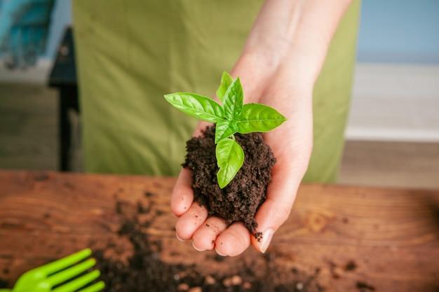 Colpo del primo piano di una donna che tiene una pianta verde in palma della sua mano. avvicinamento