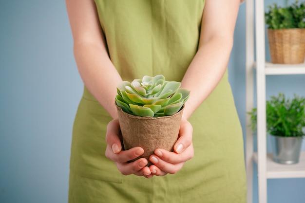 Colpo del primo piano di una donna che tiene una pianta verde in palma della sua mano