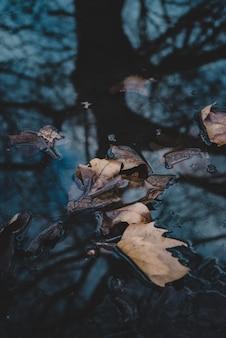 Colpo di alto angolo del primo piano delle foglie asciutte in una pozza d'acqua sulla terra