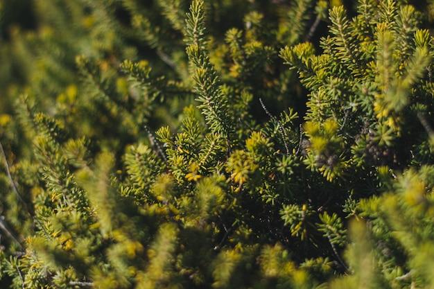 Colpo di alto angolo di una foresta piena di diversi tipi di alberi e altre piante